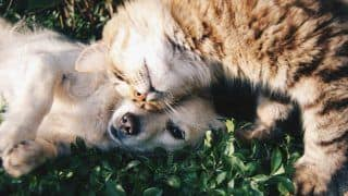 Decoding Food Diet of Cats and Dogs