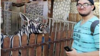 Egypt Zoo Accused of Painting Stripes on Donkey to Look Like a Zebra, Picture Goes Viral
