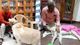 पत्नी को 'प्रताड़ित' करने में आप विधायक सोमनाथ का साथ देने वाले कुत्ते की मौत