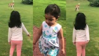 MS Dhoni's Daughter Ziva Following a Dog is The Cutest Thing on Internet Today, Sakshi Shoots -- WATCH