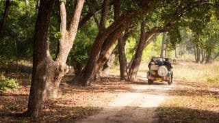 Photos of Bandhavgarh National Park, a Haven of Natural Beauty in Madhya Pradesh