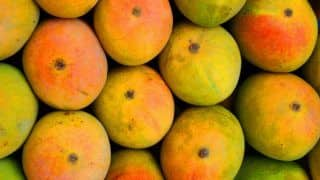 You Will Find Best Mangoes in The World in These 8 Places in India!