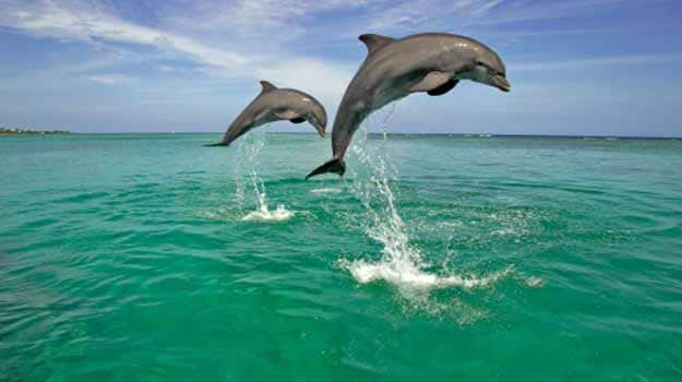 Dolphin spotting in India | News Travel News, India com