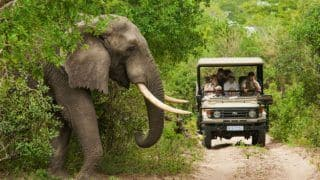 World Wildlife Day 2018: Best National Parks in South Africa To Explore Its Magnificent Wild