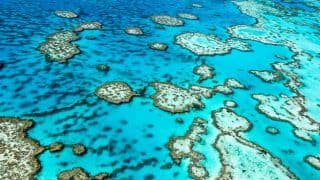 Great Barrier Reef Shows Signs of Improvement Thanks to Coral Fertility Treatment
