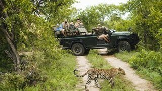Kruger National Park Photos: Stunning Pictures of Animals in South African Game Reserve will Tempt Every Wildlife Lover