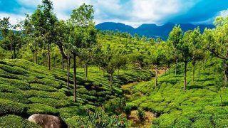 5 reasons why you must visit Munnar!