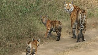 How to Reach Pench National Park in Madhya Pradesh by road, train and flight