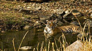 Have you visited Ranthambore National Park? You should!