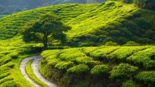 India Has Some of The Best Tea Plantations in The World; Check Out These 5