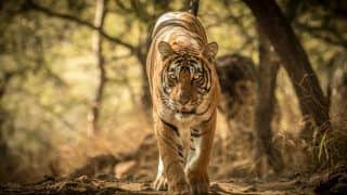 Photos of Ranthambore Tiger Reserve; Where Wild Tigers Thrive