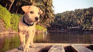 Pictures of this rescued puppy traveling the world will make your heart melt