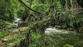 How to Reach Living Root Bridges in Meghalaya