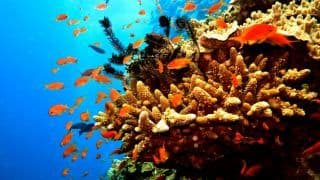 A new reef has just been discovered behind the Great Barrier Reef!