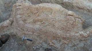 Jurassic Sea Monster Fossil Discovered in Gujarat is Oldest Skeleton in India
