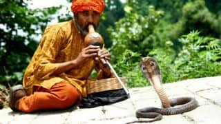 Nag Panchami Celebrations in Maharashtra: Here's Everything You Need to Know