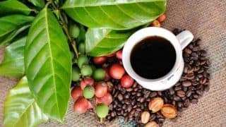 Why you must visit Chikkamagaluru: The coffee lovers' heaven!