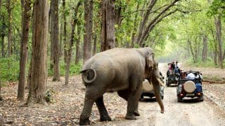 6 Incredible Wildlife Safaris to Take in India This Summer