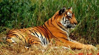 Project Tiger: Everything You Need to Know About This Initiative