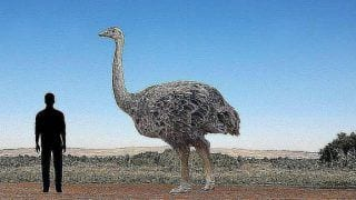 World's Largest Bird Isn't Ostrich, Its Giant Vegetarian 10-feet Tall Elephant Avian
