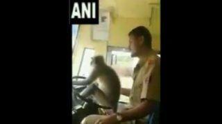 KSRTC Bus Driver Lets Langur Take Steering Wheel, Suspended After Video Goes Viral