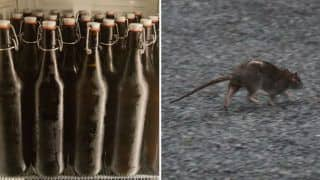 Bihar Officials Once Again Blame Rats For Drinking 200 Cans of Confiscated Beer; Deets Inside
