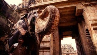 This is Why You Must Visit the Former Capital of Chola Dynasty - Thanjavur