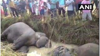 ओडिशा में करंट की चपेट में आने से 7 हाथियों की दर्दनाक मौत