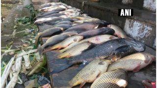 आंध्र, बंगाल की मछली नहीं खा पाएंगे बिहार के लोग, बेचने पर हो सकता है 10 लाख का जुर्माना, ये है वजह