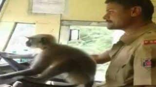 Karnataka Bus Driver Suspended For Letting Monkey Drive The Bus, Watch Viral Video