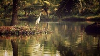 Munroe Island in Kerala is Home to The Most Calming Backwaters