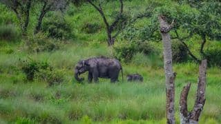 Top National Parks in Tamil Nadu For The Wildlife Lover