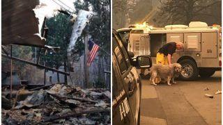 कैलिफोर्निया के जंगलों की आग में सब कुछ राख, फिर भी एक महीने तक घर के मलबे की रखवाली करता रहा डॉग