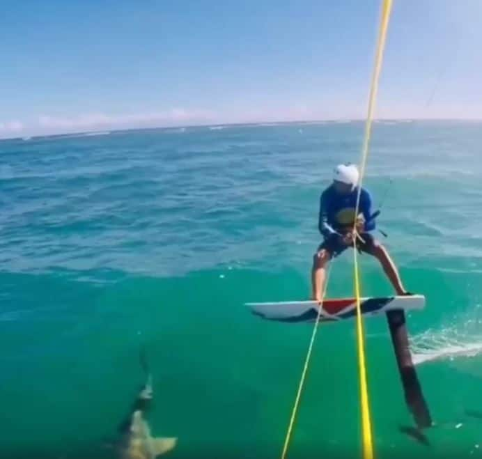Video of This Kitesurfer Colliding With Shark Will Make a Chill Run Down Your Spine, Watch