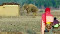 Chhattisgarh News: छत्तीसगढ़ में पिछले तीन वर्षों में हाथियों के हमले में 204 लोगों की मौत