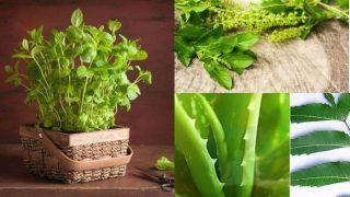 साइंटिस्ट्स का दावा, मेडिसिनल प्लांट से घटा सकते हैं वायु प्रदूषण, काम के हैं ये पौधे