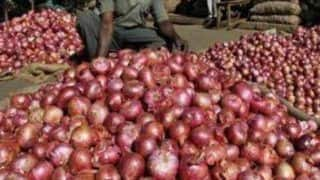 Government Bans Export of Onion With Immediate Effect as Prices Continue to Rise High