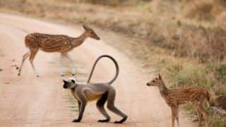 From Tigers to Reptiles, Panna National Park Has The Most Interesting Wildlife