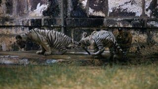 Why Visit Rewa, The Land of The White Tiger