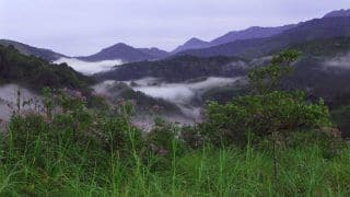 Silent Valley National Park is a Unique Reserve of Tropical Rain Forest in India