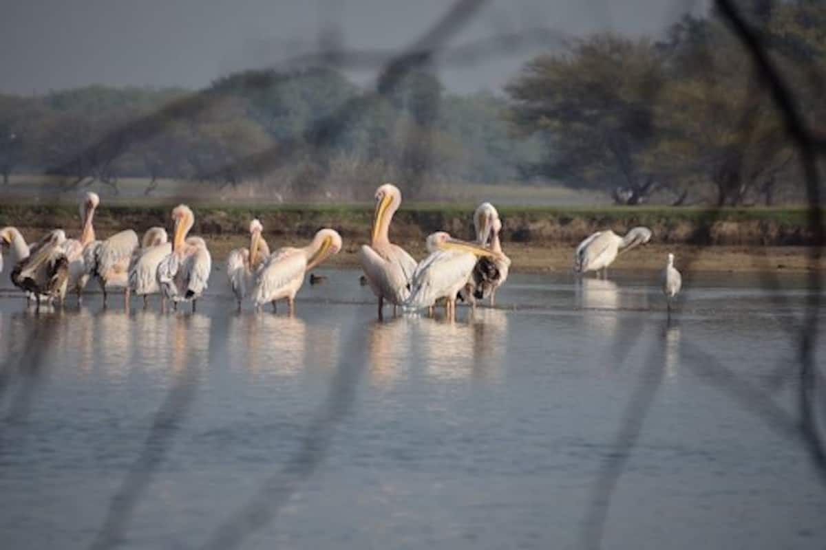 Thol Lake Bird Sanctuary Near Ahmedabad is an Experience in Itself ...
