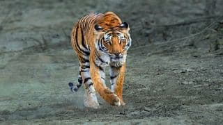 Support Ecotourism by Travelling to Valmiki Tiger Reserve in Bihar