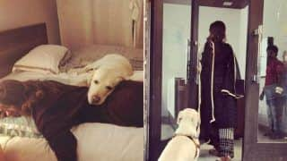 Bepannaah Fame Jennifer Winget's Pictures With Her Furry Friend is Sending Internet into a Meltdown, Check