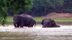 To Observe Elephants in Their Natural Habitat, Head to Chandaka Elephant Sanctuary