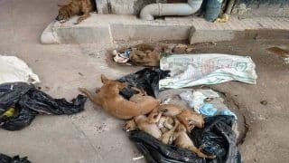 Kolkata: Two Women Arrested For Killing 16 Puppies, Dumping Bodies in Garbage Bags Near NRS Hospital