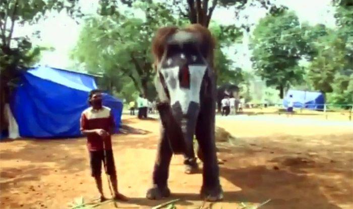 Lakshmi The Elephant