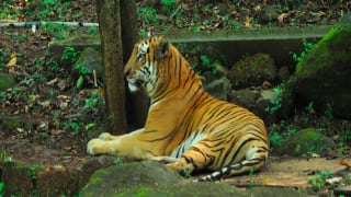 Mhadei Wildlife Sanctuary is One of The Most beautiful Experiences to Have in Goa