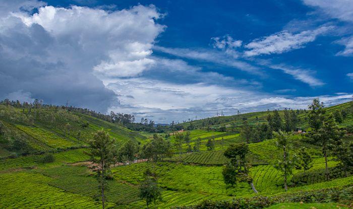 Nilgiri tea estate