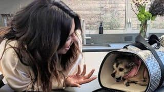 Priyanka Chopra's Pet Pooch Diana is Swaddled in Money; First a Jacket That Costs a Bomb, Now Travel Bag Worth Rs 1 Lakh