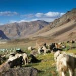 Heading To Lahaul-Spiti Valley Soon? You Might Have to Pay Green Tax